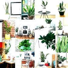 office plants no light. Indoor Office Plants Good Desk Best No Light .