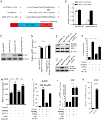 Mir 483 3p Regulates Osteogenic Differentiation Of Bone