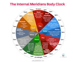 Internal Meridians Body Clock