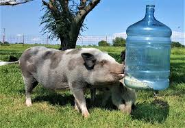 diy food dispenser homemade pig toy pignata pinata