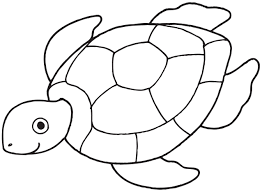 turtle drawing for kids. Unique For Sea Turtle Drawing For Kids  Gallery On O