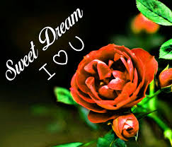 sweet dream i love you rose hd
