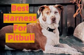 10 Best Harnesses For Pitbull Buyers Guide And Review 2019