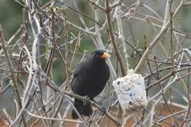 homemade bird feeders easy step by