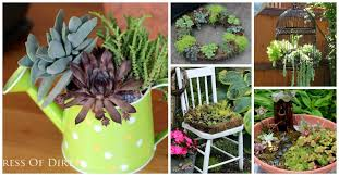 creative ways to grow succulents