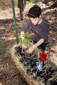 what is straw bale gardening how to