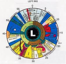 An Example Iridology Chart For The Left Eye Iridology