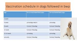 Dog Vaccination Chart Vaccination And Deworming Program In Cat And Dogs
