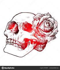 Lebky A Růže Krásná Skica Tetování červené Gradientu Stock