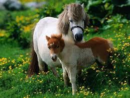beautiful baby horses wallpaper. Fine Horses Beautiful Baby Horses Wallpaper  Photo8 And Baby Horses Wallpaper O