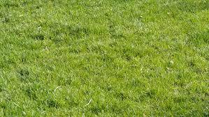 grass field background. Natural Green Grass Field Background - HD Stock Video Clip