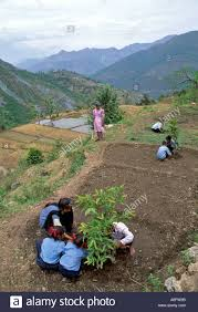 Kitchen Garden India School Kitchen Garden In The Himalayan Foothills India Stock