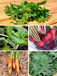 whether you are craving fresh harvests during the winter or live in an area without gardening