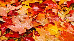 Fall Leaves Wallpaper Collection ...