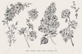 Blooming Trees Vintage Vector Botanical Illustration Spring