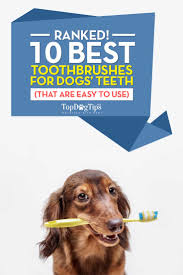 what is the best dog toothbrush