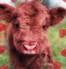 Strawberry Cow Aesthetic Fluffy Cows ...