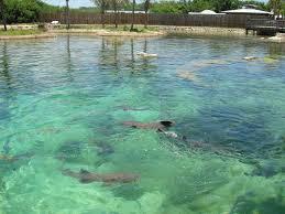 florida oceanographic coastal center palm beach and the treasure florida oceanographic coastal center
