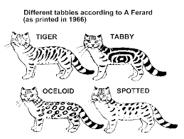 Tabby Patterns Best STRIPED SPOTTED AND TICKED CATS