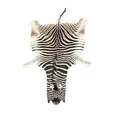 zebra skin rug authentic zebra skin rug for zebra skin rugs for uk