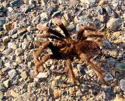 Identifying Spiders Northwest Center For Alternatives To