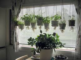 Kitchen Window Garden Indoor Hanging Herb Garden Spice Versa Space Saving Indoor Herb