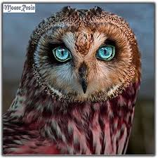 <b>MOONCRESIN Diy Diamond</b> Embroidery Red Owl Animals ...