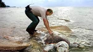 Recalling the devastating Red Tide of ...