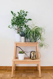 small office plant. General Living Room Ideas Very Low Light Houseplants Best Indoor Plants For Apartments Small Office Plant
