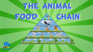 animal food chain for kids. Interesting Food The Animal Food Chain  Educational Video For Kids On For O
