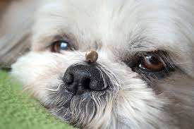 Babesia in dogs - ULTRAPET - Scientifically formulated pet food