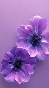 Samsung Galaxy Flower - 1080x1920 ...