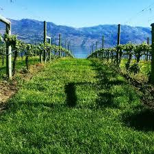 Top west kelowna wineries & vineyards: West Kelowna Wine Tour Canadian Craft Tours