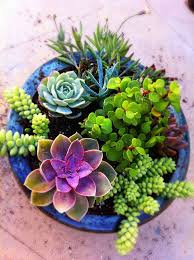 Small Picture Best 25 Succulent containers ideas on Pinterest Succulent