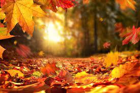 Autumn Leaves Wallpaper HD - KoLPaPer ...
