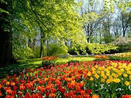 flowers garden. Covering Flowers Garden B