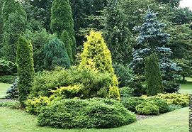 Small Picture Conifers Brighten Winter Gardenoregonlive Oregonlive Gardening