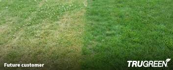 untreated lawn compared to a trugreen lawn in spokane