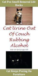 cat keeps on couch cat spray how to get rid on carpet stop