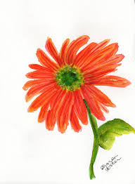 orange gerbera daisy painting original watercolor gerber daisy art