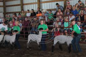 Northeast Nebraska News Co | Day 3: Friday | Ava Christensen, Maddie Graham  and Bradyn Urwiler lead them lambs for the prize
