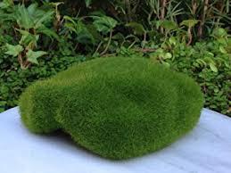 fairy garden terrarium. Exellent Garden Miniature Fairy Garden Terrarium Mini Moss Styrofoam Display Stone With