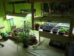 Small Picture Very Attractive Design Indoor Vegetable Gardening Brilliant