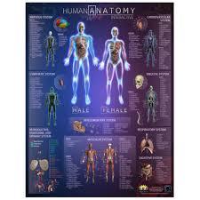 Wall Chart Of Human Anatomy Human Anatomy Interactive Wall Chart