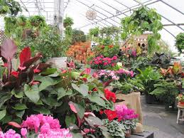 Garden Nursery Londonderry Nh