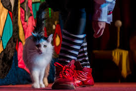 впервые в беларуси легендарный театр кошек единственный в мире
