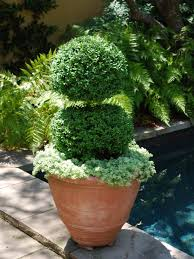 25 ideas for fabulous boxwood designs