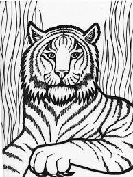 Small Picture Tiger Coloring Pages For Preschool anfukco