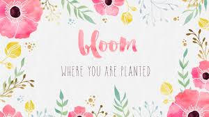 pineapple wallpaper quotes. bloom-where-you-are-planted-desktop pineapple wallpaper quotes