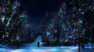 Forest Christmas Tree Winter New Year Decoration Light Hd Wallpaper